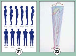 Postura e legame con la percezione